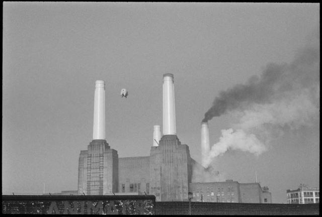, 'ANIMALS - Pink Floyd,' 1976, Bridgeman Editions