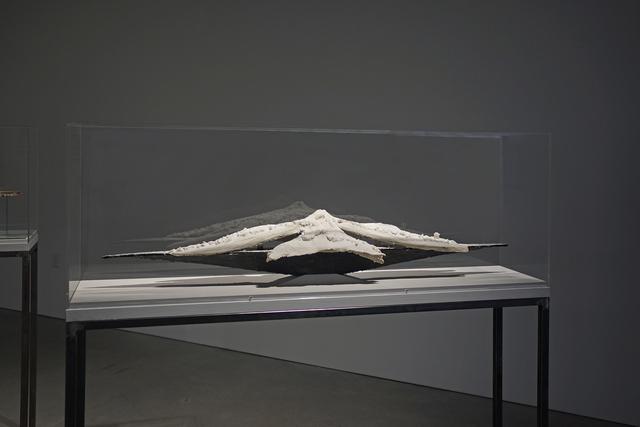 John Roloff, 'L/S Ship (Calera Orchid)', 2019, Anglim Gilbert Gallery