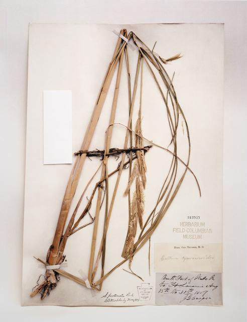 Terry Evans, 'Field Museum, Spartina, 1857', 2000-2001, San Francisco Museum of Modern Art (SFMOMA)