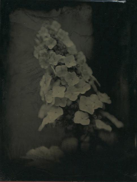 , 'Hydrangea,' ca. 2008, Gallery NAGA