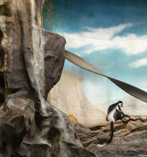 , 'Colobus Monkey and Clouds ,' , Galerie Dumonteil