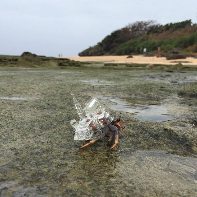 """, 'Why Not Hand Over a """"Shelter"""" to Hermit Crabs? -White Chapel-,' 2014-15, MAHO KUBOTA GALLERY"""