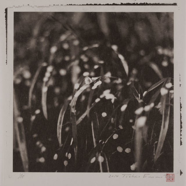 , 'Rain Wet Petals Fallen on the Leaves of a Japanese Iris, Kakunodate, Akita,' 2014, Micheko Galerie