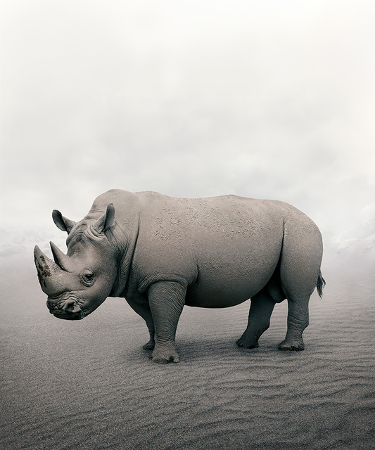 Alice Zilberberg, 'Restful Rhino', 2019, Photography, Photo-based digital painting (Paper - Canson Infinity Rag Photographique), Isabella Garrucho Fine Art
