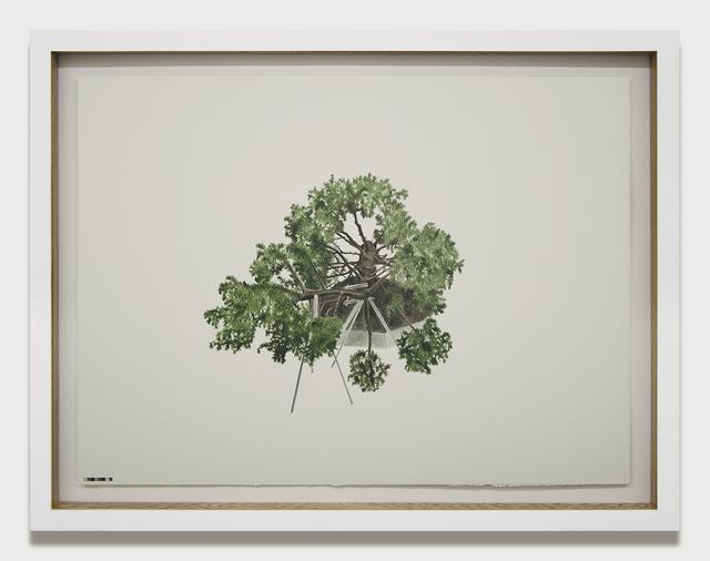 , 'Prototipos para una naturaleza rehabilitada (1.2),' 2014, Galeria El Museo