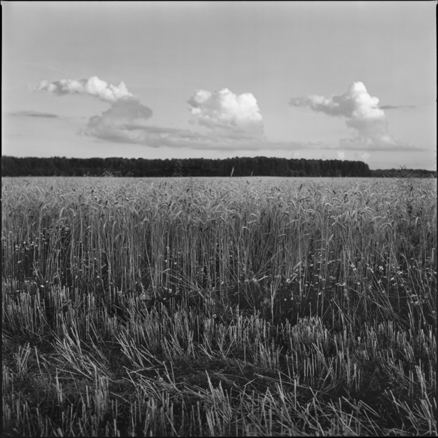 ", '""Rye"",' 2017, Krokin Gallery"