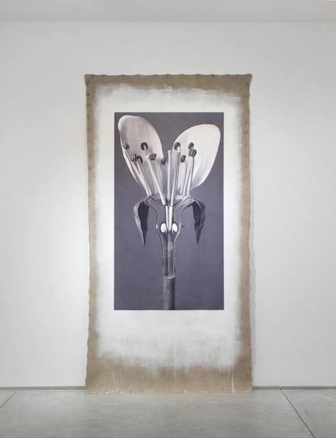 , 'Art Forms in Mechanism XVIII,' 2016, Inman Gallery