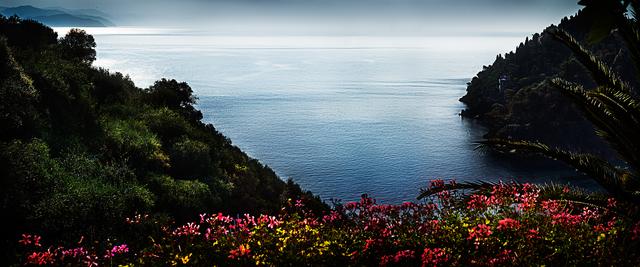 David Drebin, 'Portofino Flowers ', 2013, Isabella Garrucho Fine Art