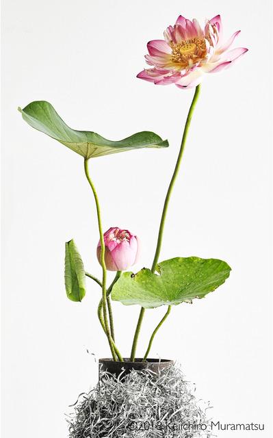 , 'lotus  12,' 2018, Galerie Marie-Robin