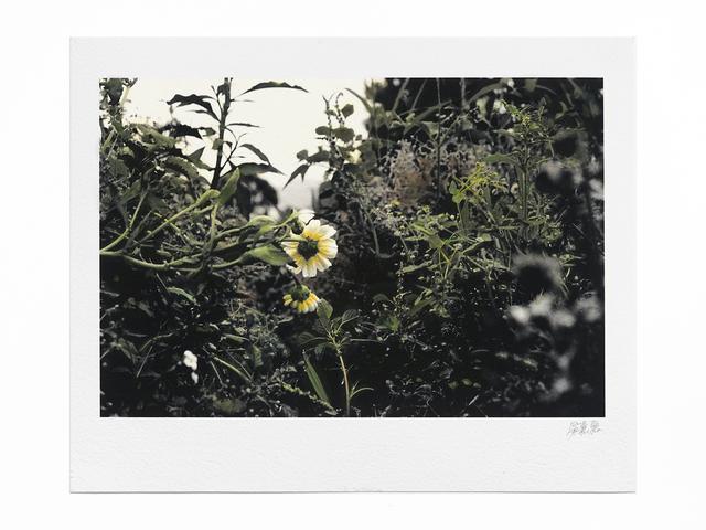 Lo Lai Lai Natalie, 'The Circadian Clock: Crown Daisy (II) no.1', 2018, Blindspot Gallery