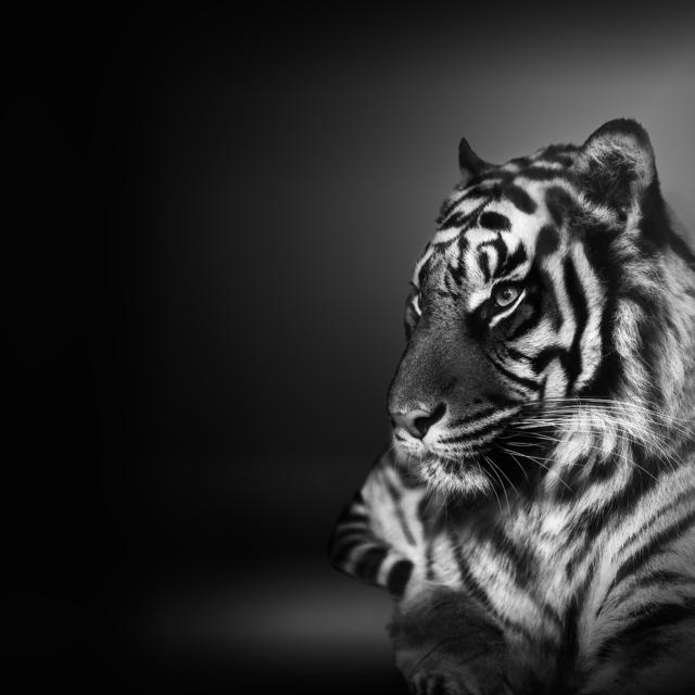 , 'Tiger 虎 ,' 2018, ARTE GLOBALE