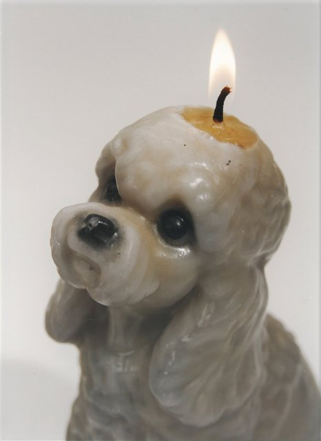 , 'Candle/Dog,' 2008, Hosfelt Gallery