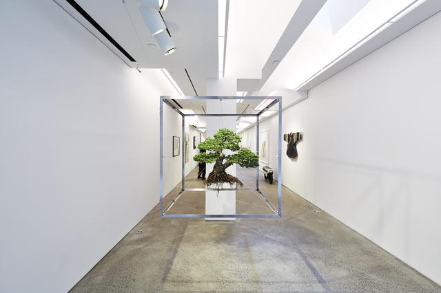 , 'SHIKI1,' 2016, Chamber