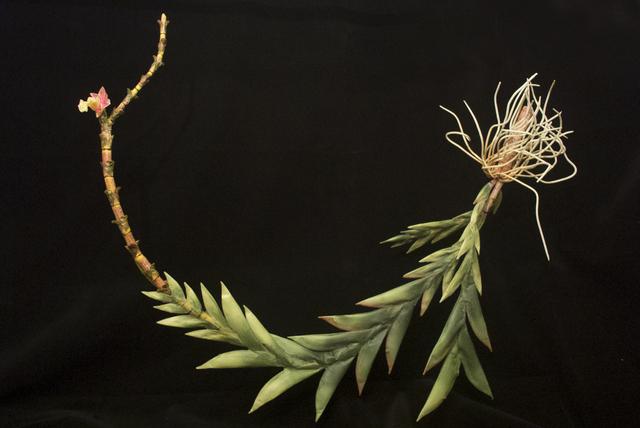, 'END34 Dendrobium lohanense,' 2015, Chan + Hori Contemporary