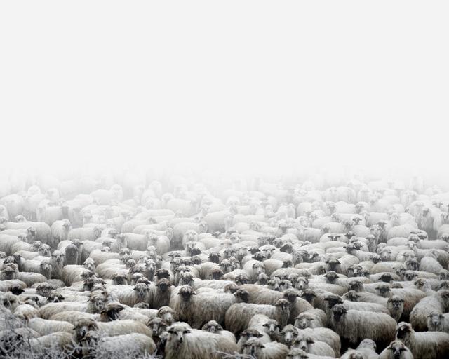 , 'Sheep Farm (Silvasude Sus, West Romania),' 2012, Robert Koch Gallery