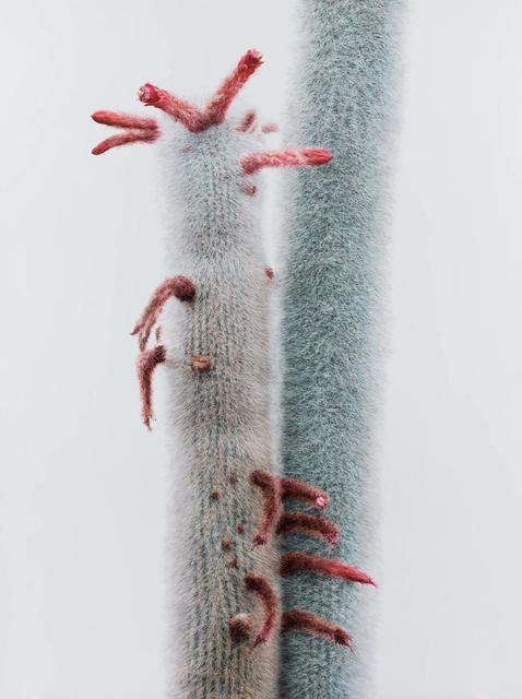 , 'Cactus No.92,' 2015, Johyun Gallery