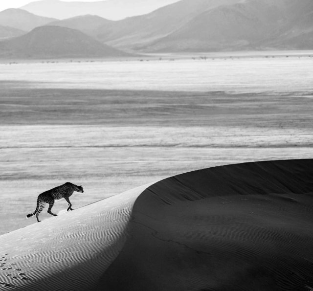 David Yarrow, 'Prowl', 2013, Photography, Archival Pigment Print, Maddox Gallery