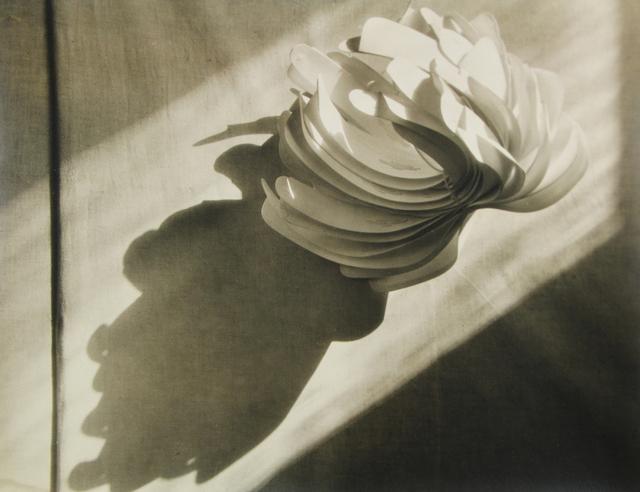 , 'Cactus Collaratus (variant),' 1931, Stephen Bulger Gallery