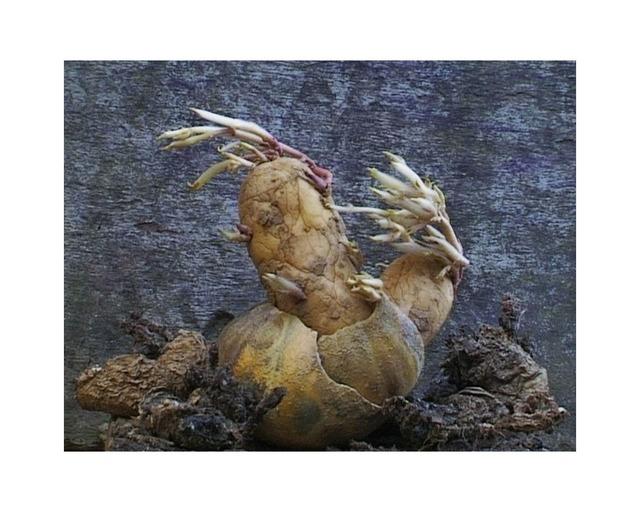 , 'Patate Coeurs 1,' 2002, Musée d'Ixelles