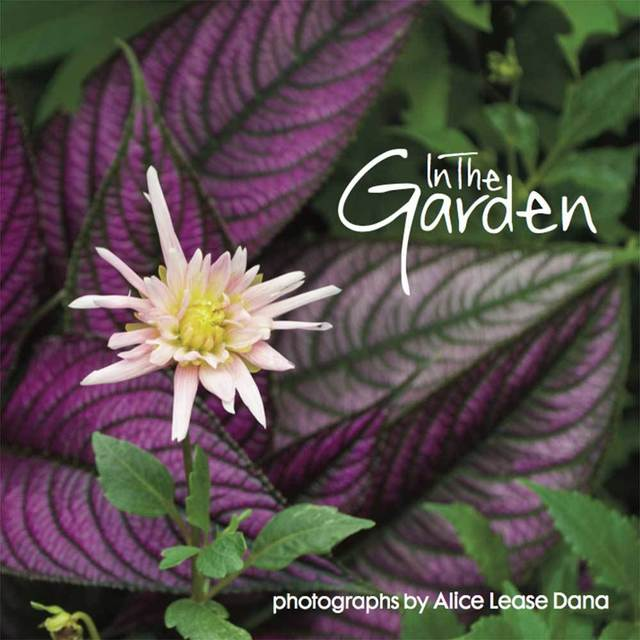 , 'In The Garden: Flower Photographs of Alice Lease Dana,' 2017, The Burns Archive & Press