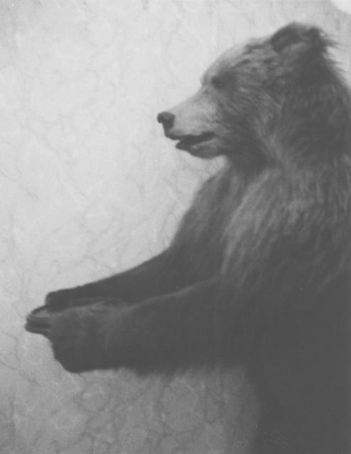 , 'Tolstoy's bear, Moscow,' 2005, Robert Miller Gallery