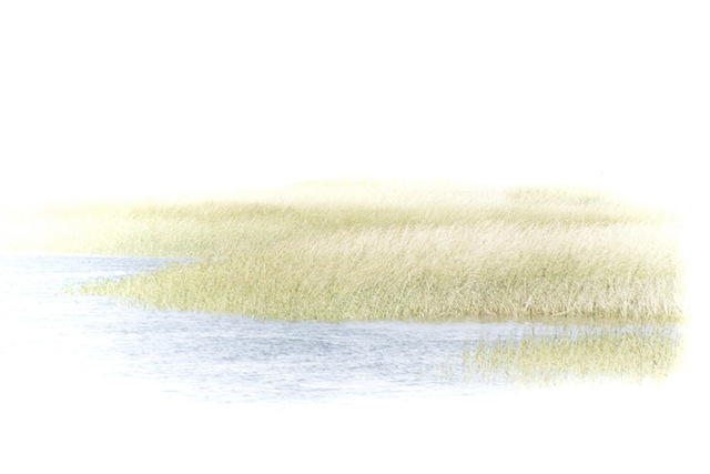 , 'In The Water Grasses,' , Soho Photo Gallery