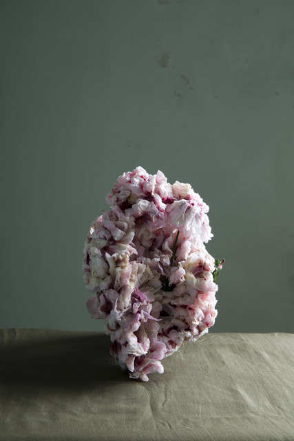 , 'Untitled 6 - from the series Plants,' 2013, Hopstreet