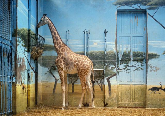 Candida Höfer, 'Zoologischer Garten Paris II', 1997, Photography, C-Print, OMR