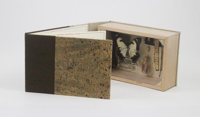 , 'Papilio Claucus Maynardi,' 2014, Seager Gray Gallery