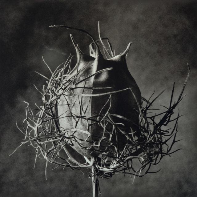 , 'Devil In A Bush,' , Gallery 270