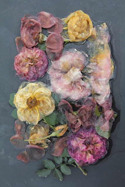 , 'Rose Plate Variety (from the Ghost Garden Series),' 2013, Gallery NAGA