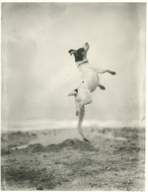 Jacques Henri Lartigue, 'Toby', 1923, Photography, Silver gelatin print, °CLAIRbyKahn Galerie
