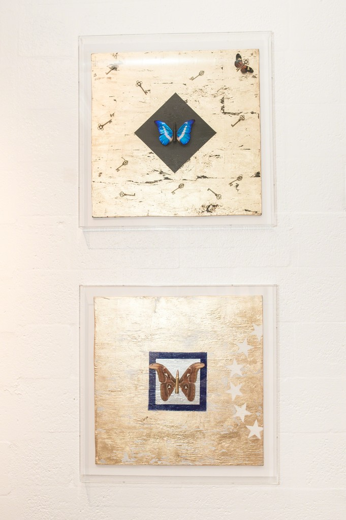Butterfly Boards III and IV