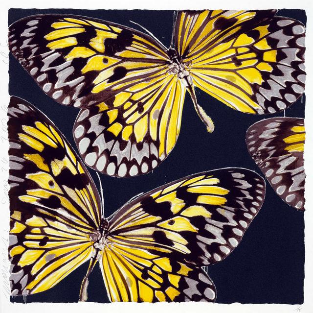 , 'Monarchs, Jan 24, 2006,' 2006, Maune Contemporary