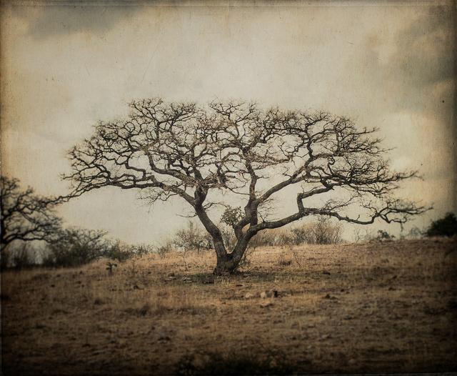 , 'Bare Tree, Mexico,' , Etherton Gallery