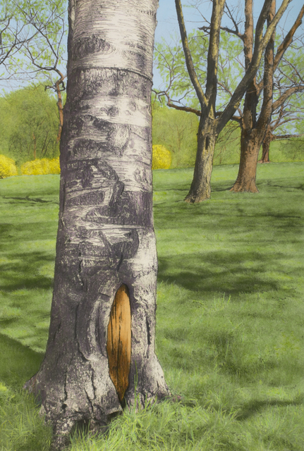 , 'Birch Trunk with Yellow Bushes,' , Pucker Gallery