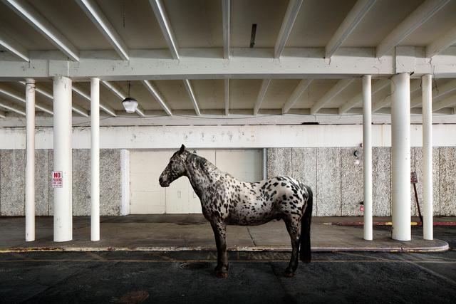 , 'Zinneke,' 2014, Galerie Dumonteil
