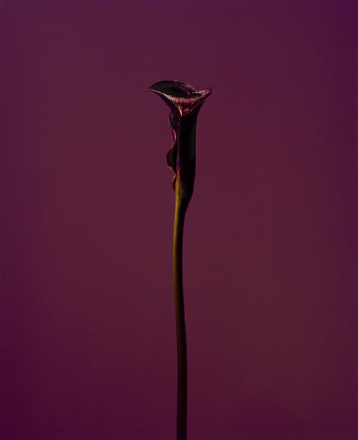, 'fig. XX,' 2017, Galerie SOON