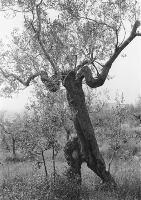 , 'Tuscan Trees #20,' 1996, Wirtz Art