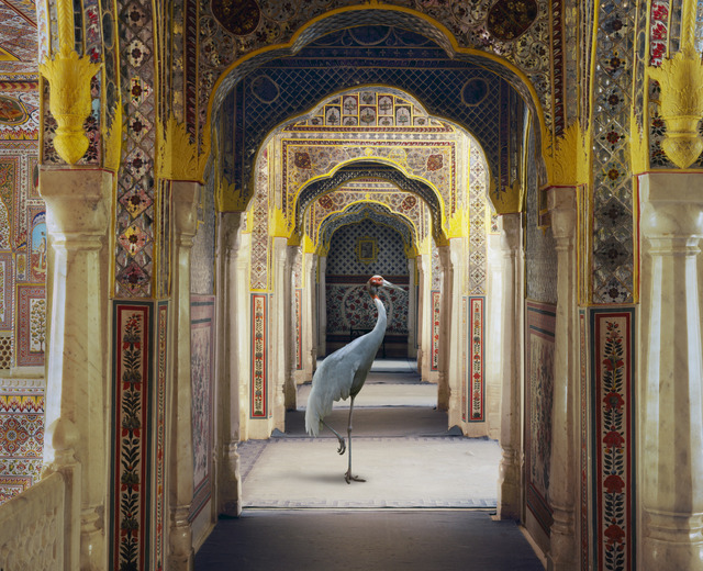 """Karen Knorr, 'The Holding of Vigilance, Samode Palace.From the series """"India Song""""', Danziger Gallery"""