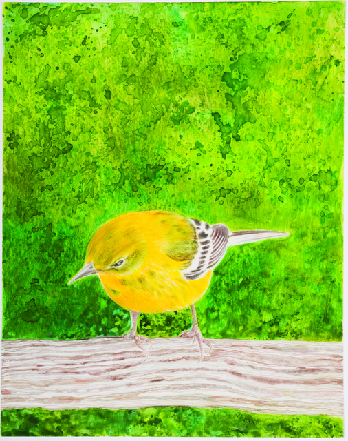 Eleanor Hubbard, 'Wet Warbler', 2015, Drawing, Collage or other Work on Paper, Watercolor and colored pencil on yupo paper, Walter Wickiser Gallery