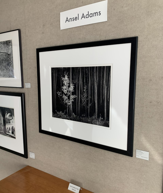 Ansel Adams, 'Aspens, Northern New Mexico', 1958, Weston Gallery
