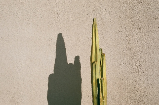 , 'Untitled (Cactus and pink wall),' 2013, Cob