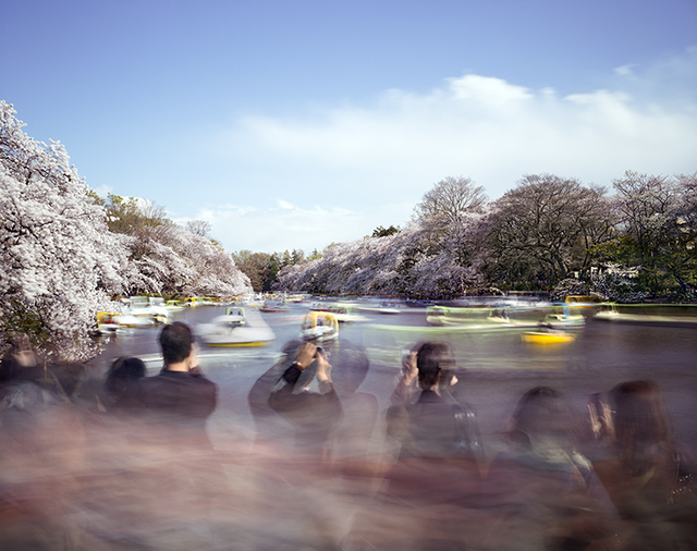 , 'Hanami #14, Inokashira Park, Saturday April 5th (TV14614),' 2014, Benrubi Gallery