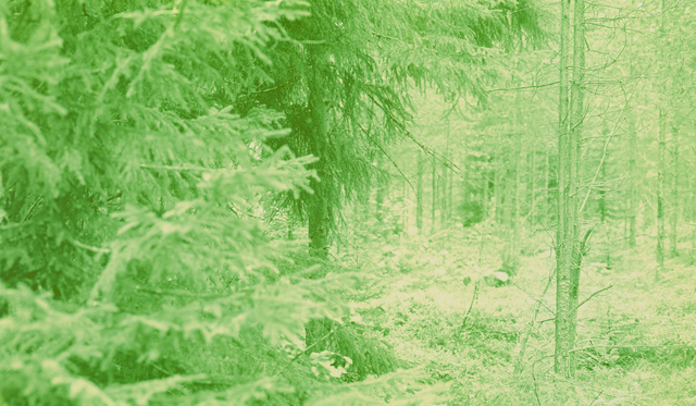 , 'Sweden 065 YBY,' 2013-2016, L. Parker Stephenson Photographs