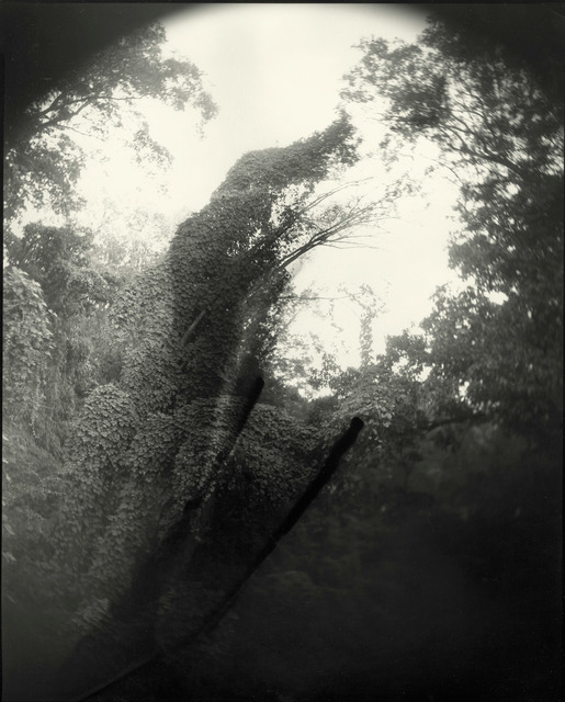 , 'Deep South, Untitled (Tree with Two Streaks),' 1998, Gagosian