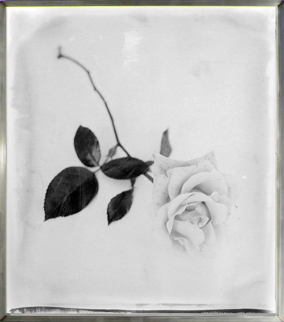 , 'Rose Single Stem,' 2003, HackelBury Fine Art