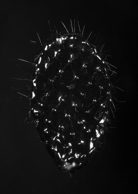 , 'Sabra Traces, darker,' 2017, °CLAIR Galerie