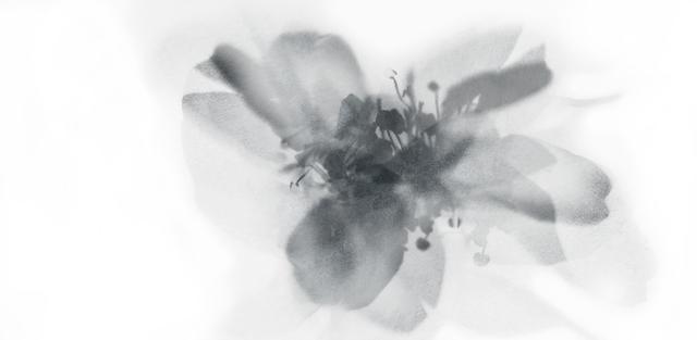 , 'Insieme Naturale 046,' 2005, Shazar Gallery