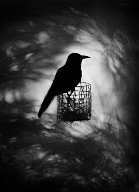 , 'Raven,' 2012, see+ Gallery